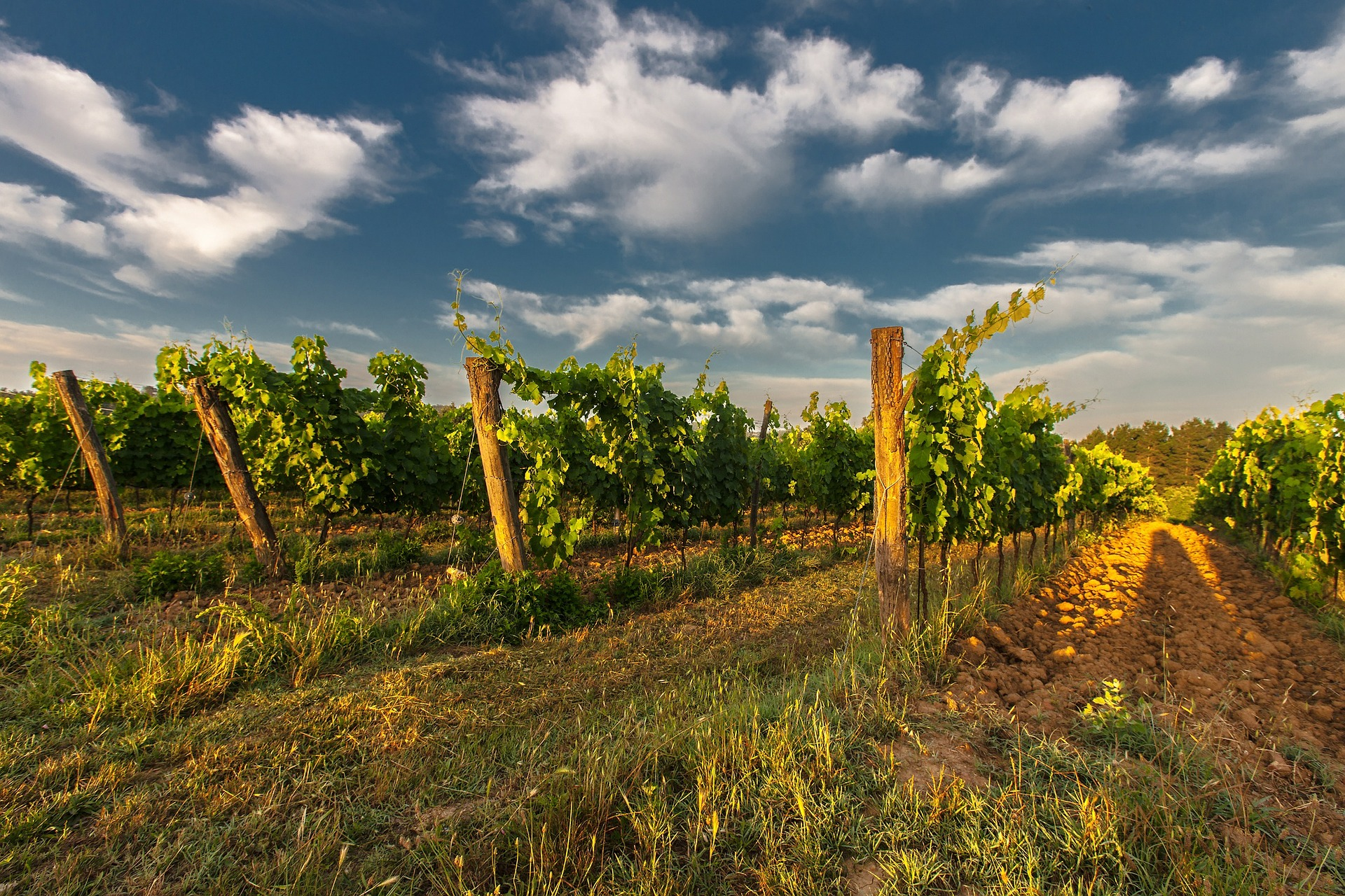 wine production in tuscany italy